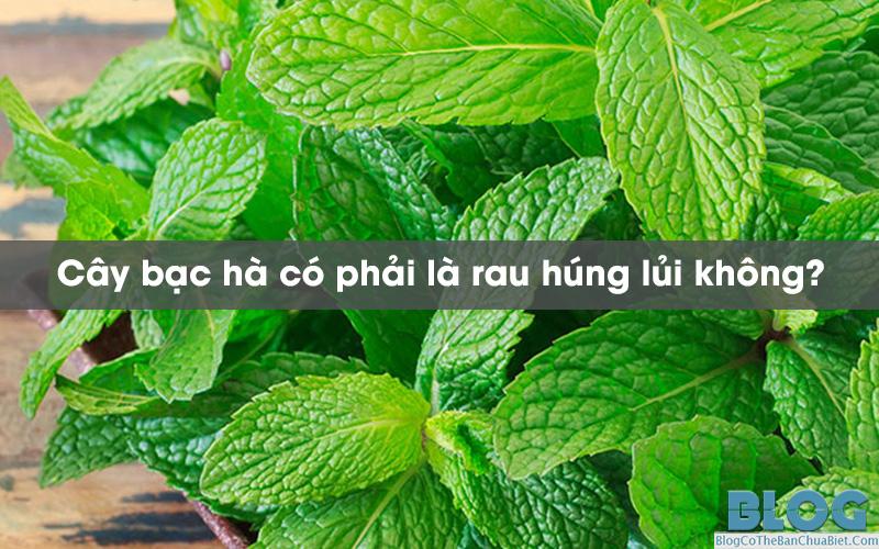 bac-ha-co-phai-la-rau-hung-lui-khong