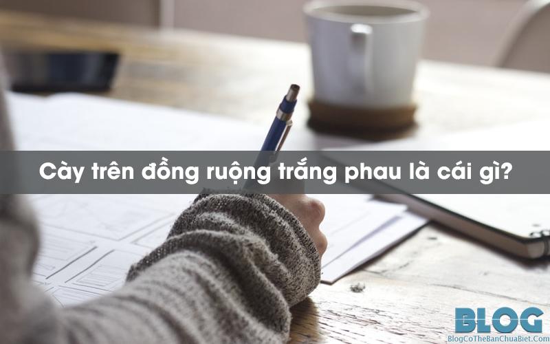 cay-tren-dong-ruong-trang-phau-la-cai-gi
