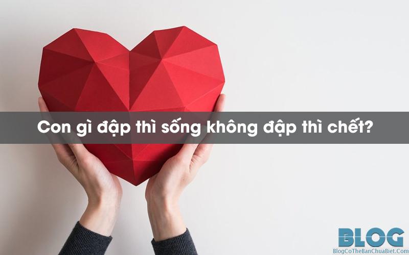 con-gi-dap-thi-song-khong-dap-thi-chet