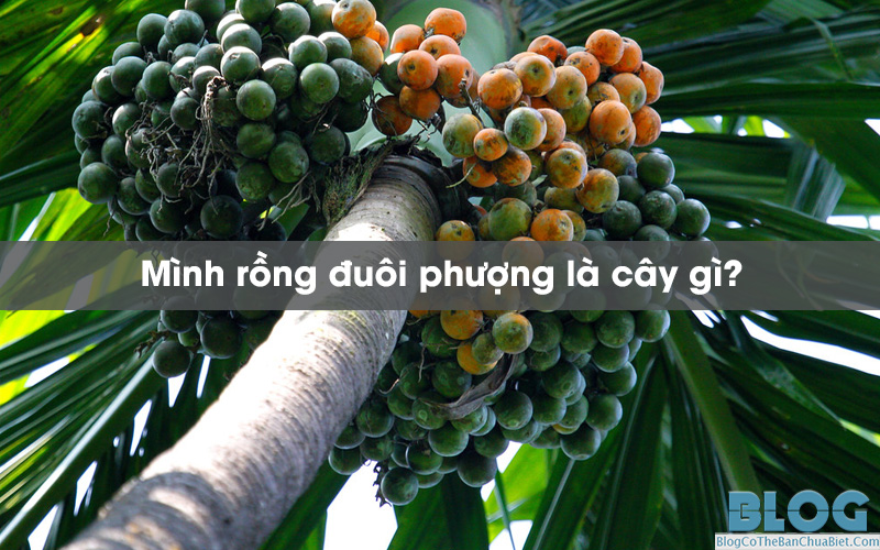 minh-rong-duoi-phuong-la-cay-gi