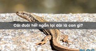 cai-duoi-het-ngan-lai-dai-la-con-gi
