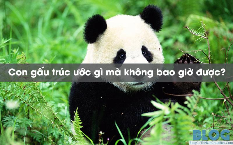 con-gau-truc-uoc-gi-ma-khong-bao-gio-duoc