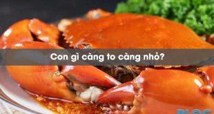 con-gi-cang-to-cang-nho
