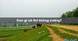 con-gi-co-thit-khong-xuong