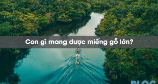 con-gi-mang-duoc-mieng-go-lon