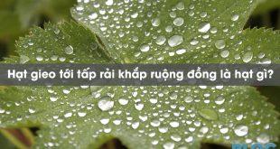 hat-gieo-toi-tap-rai-khap-ruong-dong