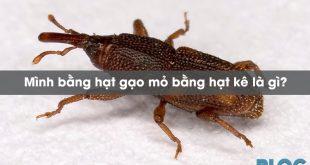 minh-bang-hat-gao-mo-bang-hat-ke-la-gi