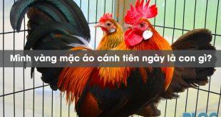 minh-vang-mac-ao-canh-tien-ngay-la-con-gi