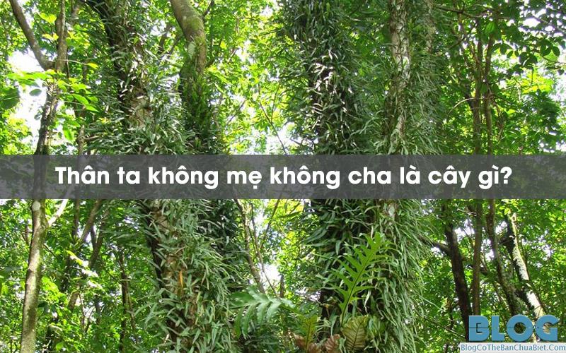 than-ta-khong-me-khong-cha-la-cay-gi