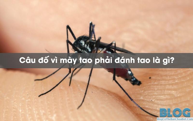 vi-may-tao-phai-danh-tao-la-gi