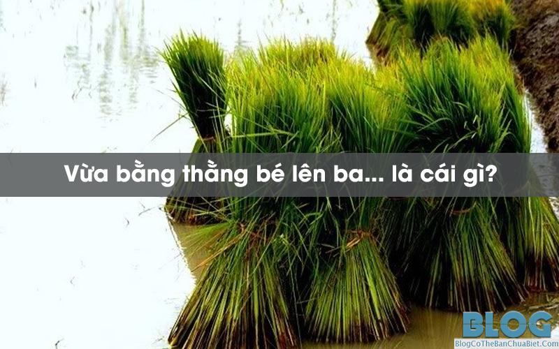 vua-bang-thang-be-len-ba