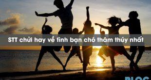 stt-chui-hay-ve-tinh-ban-cho-tham-thuy