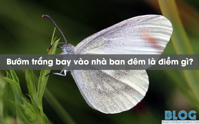 buom-trang-bay-vao-nha-ban-dem-la-diem-gi
