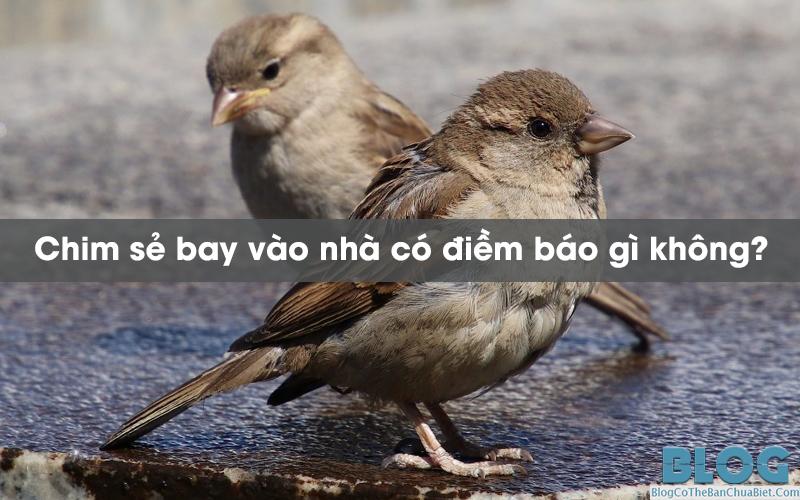 chim-se-bay-vao-nha-co-diem-bao-gi