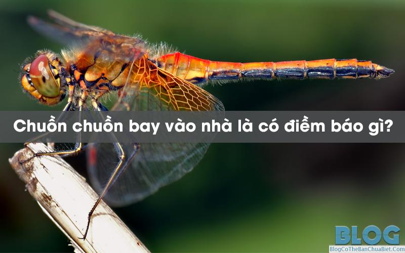 chuon-chuon-bay-vao-nha-la-co-diem-bao-gi