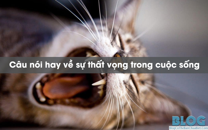 cau-noi-hay-ve-su-that-vong-trong-cuoc-song
